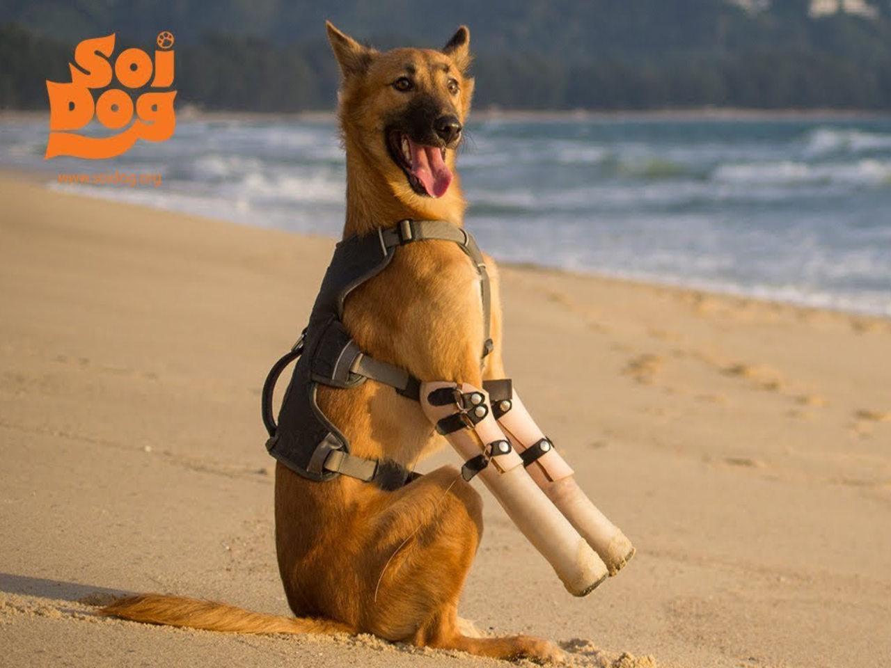 Soi Dog